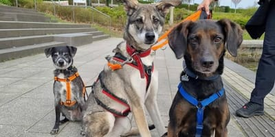 Das süße Hunde-Trio.