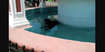 Calor extremo en Yucatán: en la fuente de la plaza hay algo inesperado