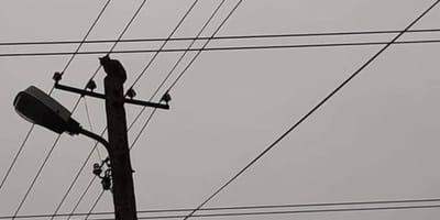 Jędrzejów : kot utknął na szczycie słupa energetycznego. Kto mu pomógł?
