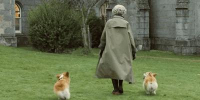 queen walking two corgis outside