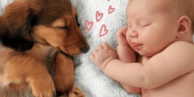 TOP 15 de las mejores razas de perros para niños