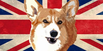 UK flag with corgi face