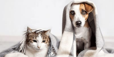 Hund und Katze mit Decke