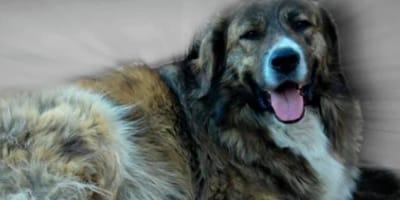 Addio al cane Tigro, i cittadini fanno un gesto in suo onore