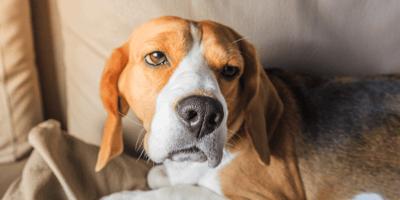 Symptomen van pijn: Hoe herken je pijn bij jouw hond?