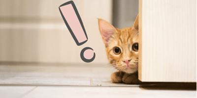 gato se asoma puerta