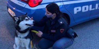 Brescia: Polizia salva due cani abbandonati nel peggiore dei modi
