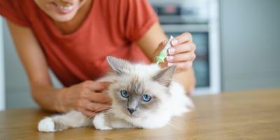 Quale antiparassitario per gatti scegliere nel 2021?