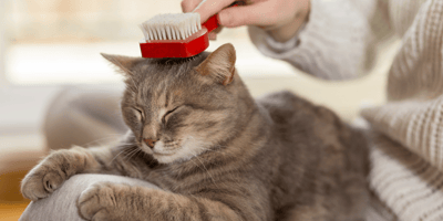 How to brush your cat:  Grooming tips and techniques