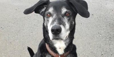 Sachsen: Mann entführt Hund aus Tierheim, doch der Vierbeiner rächt sich sofort!