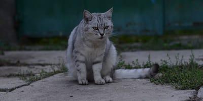 Un gato callejero