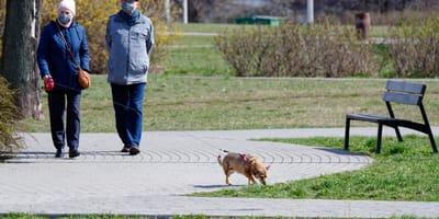 Nowa Sól: pies zjada coś na spacerze. Kiedy weterynarz robi USG, jest przerażony