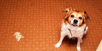 Vómitos y diarrea en perros después de vacuna: ¡actúa rápido!