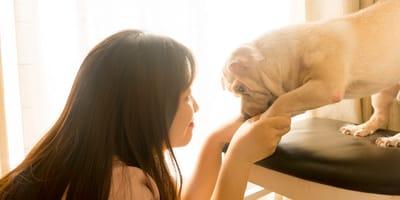 I cani non distinguono suoni simili: lo studio