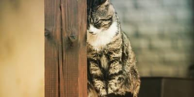 The final farewell - do cats say goodbye before they die?