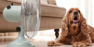 Cómo quitarle el calor a un perro: los trucos más efectivos
