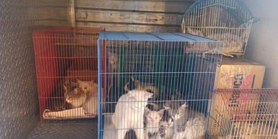 Albergue al límite recibe 40 gatitos de golpe y decide salvarlos a pesar de todo
