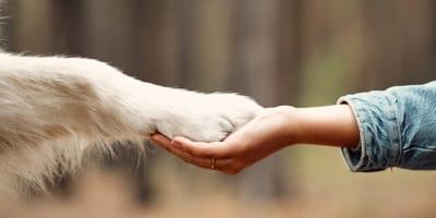 Jak nauczyć psa komendy daj łapę?