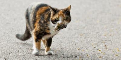 Ausgangssperre für Katzen nach 20 Uhr gefordert