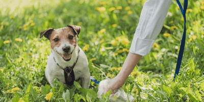 New bins coming to the UK will turn dog poop into something much more valuable