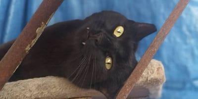 Esta gata esconde un secreto que impide su adopción, ¿de qué se trata?
