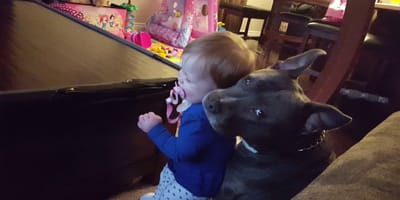 perro beso a niño