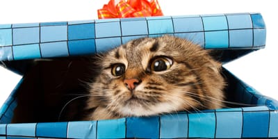 gato dentro de un paquete regalo