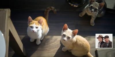 tres gatos miran hacia arriba y en en el cuadro joaquin sabina y serrat