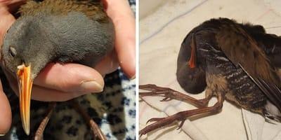 Szczecin: opiekunka kota ratuje sparaliżowanego ptaka. 10 dni później dzieje się coś niesamowitego