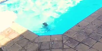 Hund kämpft im Pool ums Überleben: Was die Kamera dann aufzeichnet, ist unglaublich