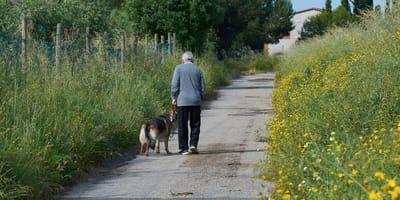 Un perro camina junto a un anciano.