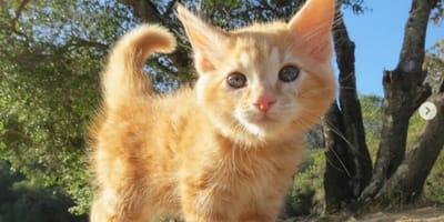 Winziges Kätzchen soll vermittelt werden, doch es hat einen ausgefuchsten Plan!