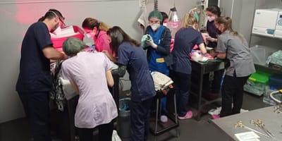 veterinarios asistiendo parto