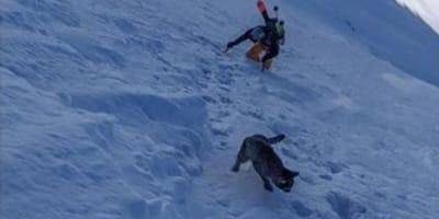 Gatto smarrito segue gli escursionisti su una montagna di 3000 metri (Foto)