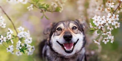 Hunde im Mai: Das sollte jeder Halter nun wissen