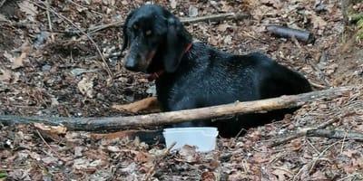 Pies przywiązany do drzewa i porzucony w środku lasu pod Mszczonowem. Ale to nie koniec potworności