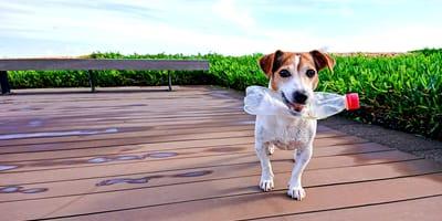 Día Mundial del Reciclaje: qué cosas de mi perro y gato puedo reutilizar para ayudar al medioambiente