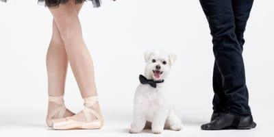 Gatsby il Maltese è il re della Giornata della danza 2021 (Video)