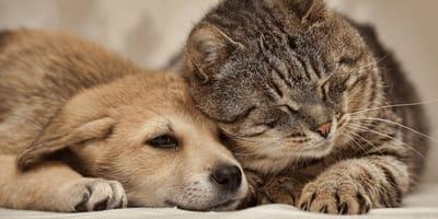 """Neues Gesetz: Hier gelten Haustiere bald als """"lebendige, fühlende Wesen"""""""