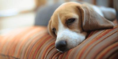 Mijn hond heeft epilepsie, wat nu?