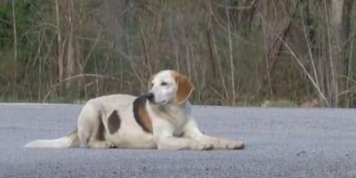 Streunender Hund wird aus einem rührenden Grund zum Star in den USA