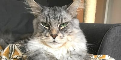 7 cosas que demuestran que tu gato controla tu vida