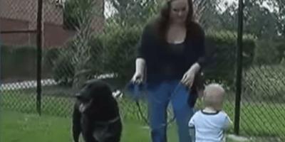 grabacion perro bebe y niñera