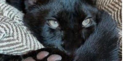 Porta a casa un gattino: il suo cane capisce subito che è una bugia