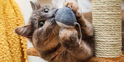 Quali sono le razze di gatti più attivi?
