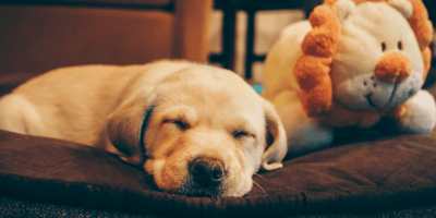 How to wake a dog: The truth in letting sleeping dogs lie