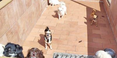 Sequestrato un allevamento ad Ancona, ma i cani sono in stato critico