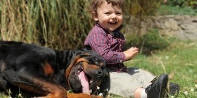 6 foto di cani teneri considerati (ingiustamente) pericolosi