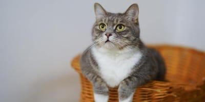 ¿Cómo saber la edad de un gato? Trucos para descubrirla