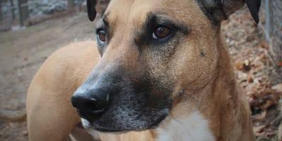 ¿Sabes cuántos años vive un perro callejero? La  vida secreta de los lomitos de la calle